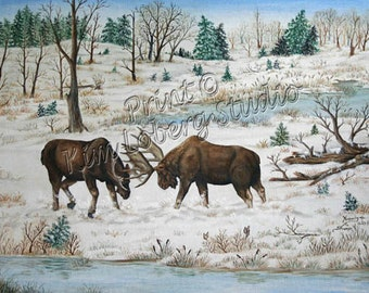 Wildlife Bull Moose battle fight Wild animal large deer ACEO mini art PRINT Kim Loberg Nebraska Artist EBSQ