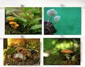 Four Mushroom Photographs Affordable Home Photography Prints Nature Photography Decor Nature Lover Woodland Scene