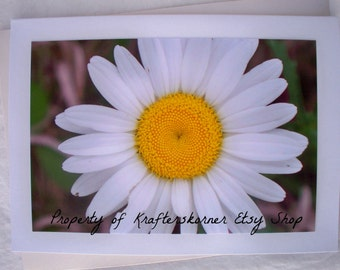 Floral Photo Card Lone Daisy White Flower
