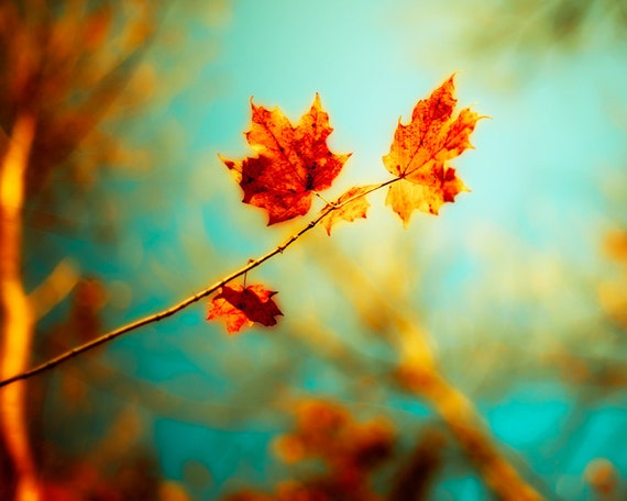 Autumn photography burnt orange leaves fall decor autumn wall art maple forest woodland print turquoise sky blue green