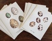 Digital Version ~ Quail & Wild Bird Eggs Note Cards