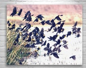 Blackbirds, Birds in Flight, Flock of Birds, Bird Art, Bird Photography, Wetlands Art, Whitewater Draw, Arizona Birds, Cochise County