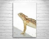 Horned Lizard Print, Horned Toad Picture, Lizard, Wildlife Photography, Reptile Art, 5 x 7, 8 x 12, 11 x 17, 16 x 24, Murray Bolesta