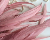 COQUE TAIL FEATHERS Loose / English Rose Pink / 153