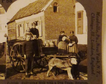 Antique  KEYSTONE Photo 1900s DOG TEAM Delivering Milk Belgium 7x3.5