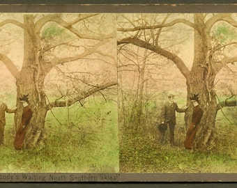Lovers Under Twisted Tree / Sunset - Mills Novelty Co - Handtinted Real Photo Stereoview