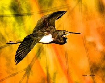Heron Art, Flying Bird Photomontage, Orange Green, Texas Wildlife Wilderness, Woodland Animal, Wall Hanging, Home Decor, 8 x 10 Giclee Print