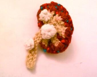 Crochet Kidney Cross Section, Passing Kidney Stones