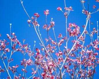 Beautiful pink flowers on blue sky