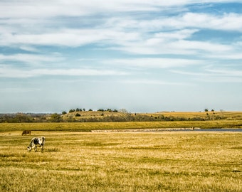 Landscape Photography, Nature, Spring, Sky, Clouds, Field, Cows, Oklahoma, Fine Art, (Title: Oklahoma Field)