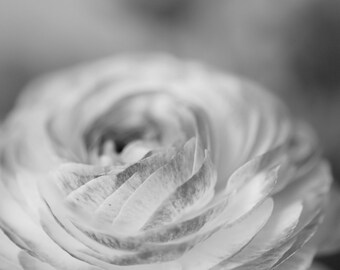 Ranunculous, Black and White Photography, Set of 5, Digital Download, Flower Photography, Dreamy Photography, Printable Art