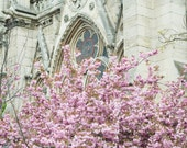 Paris Fine Art Photography – Cherry Blossoms at Notre Dame, The Rose Window, Large Wall Art