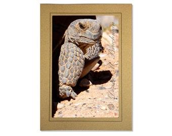 Desert Photography - Desert Tortoise Photogreeting Card Blank Inside - Tortoise Photos - Cards for Kids - Birthday Cards - Turtle Cards