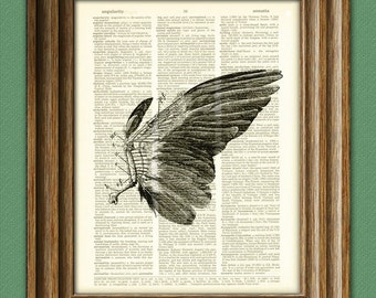 Dove Wing Anatomy bird wing bones and feathers beautifully upcycled vintage dictionary page book art print