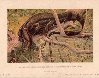 c. 1902 DINOSAUR PRINT - hydrosaurus salvator - rare original antique print - fossil reptiles - extinct animal print - prehistoric animal