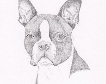 how to draw a boston terrier view dog notecards pencil by hansford800 on etsy 8463