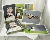 Atlantic Puffins, Note Card Set of (6)