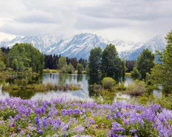 Grand Tetons Photograph purple lupines scenic mountains morning peaceful glorious 8x10 green trees Mount Moran Jackson Hole Wyoming