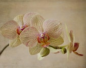 Yellow Spotted Orchid - fine art flower photography, made in Israel,