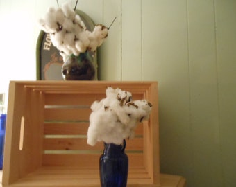Cotton Stalks Bolls Pods Raw Cotton