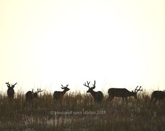 Deer Photography, Bucks in Velvet,  Wildlife Photography Fine Art Photo