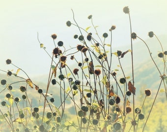 Fall Landscape, Sunflower Stalks Woodland, Fall Colors,  Fine Art Photo