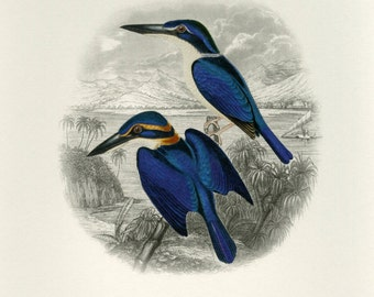 Kingfisher Print Book Plate SALE~~Buy 3, get 1 free