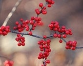 Berry Berry Nice, Fine Art Photography, red berries, red, orange, grey, black, fall decoration, winter decoration, country living, holidays