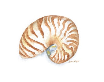 Nautilus Seashell Watercolor Painting - 10 x 8 - Giclee Print - Beach Summer Painting 11 x 8.5