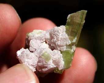Green Watermelon Colored Tourmaline Cluster Specimen with Albite and Lepidolite