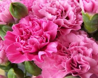 BODY SCRUB ~ Carnations Body Scrub ~ Sugar or Sea Salt Body Polish 8 oz Jar