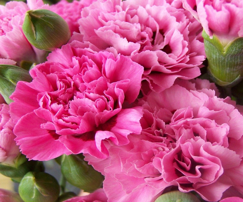 BODY SCRUB Carnation Flowers Body Scrub Sugar by CedarCreekSoaps1