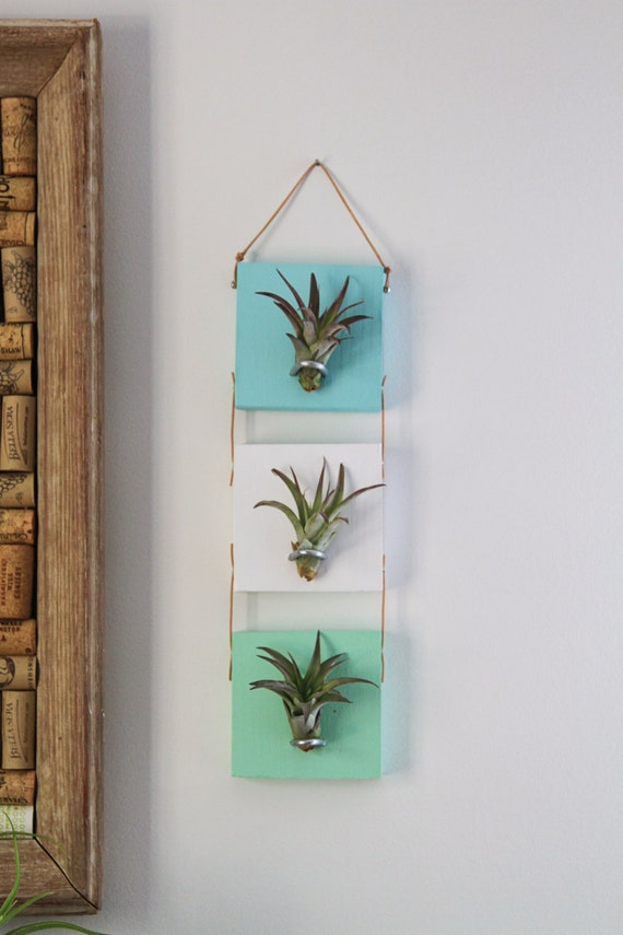 Items similar to air plant wall hanging cool living art for Air plant wall art