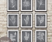 Herb Garden Collection - Set of 9 - Art Prints (Featured in Charcoal) (Customizable colors) Mint Basil Sage Rosemary Thyme Oregano