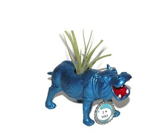 Air plant in metallic blue hippo animal planter.