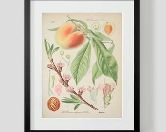 Botanical Peach Print Plate 393