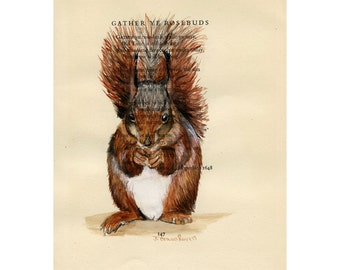 Red Squirrel II - Gather Ye Rosebuds -  Original Watercolor Painting on Antique Book page - 6 1/2x8inches