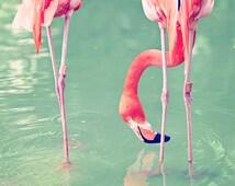"Flamingo Photography - Tropical Pink Flamingos - Nature Photography - Nautical Sea Decor - Travel Photograph - Fine Art Photo - ""Flamingos"""