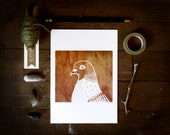 Daily Drawing No. 4 Pigeon on Wood 5x7 illustrated art print, woodgrain, bird illustration, bird wall decor, square art, nature, city life