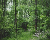 Spring Forest - 8x10 Fine Art Photograph, Wall Art, Room Decor, Woods, Trees, Nature