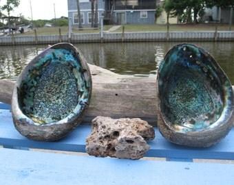 Coastal Home Decor Gorgeous Natural Green Abalone Sea Shell