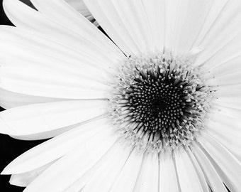 White Flower, Macro, Black and White, Photography