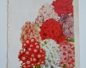 Vintage 1960s  Red Pink White Phlox for the Border  Flowers Book Darling Photo Book Plate