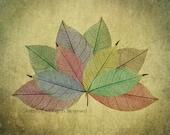 Soft Pastel Colored Skeleton Leaves Floral Leaf Plant