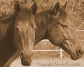 Equine Photography Fine Art Photography Animal Photography 8x10 Print Quarter Horse Mare and Gelding Best Friends Sepia
