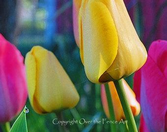 Flower Greeting Card Tulip Flowers Photography Fine Art Photography Photo Card