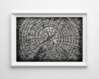Nature Photography Tree Rings - Black and White Art Forest Decor Tree Art, Monochrome Nature Art - Small and Large Wall Art Prints Available