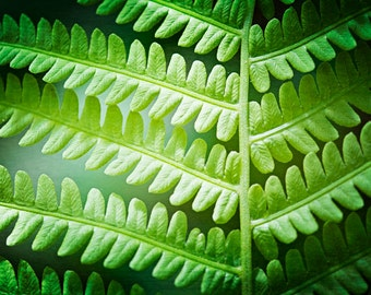 "Leaf Photography, green leaves nature abstract print modern fern botanical art prints spring wall photo, 11x14, 8x10 Photograph, ""Fern Leaf"""