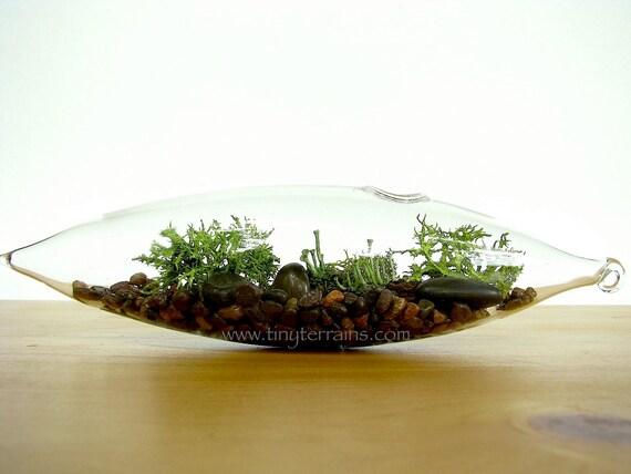 Modern Glass Vessel Lichen Moss Terrarium