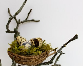 Natural birds nest with real eggs